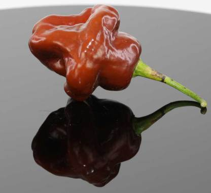 Chocolate Trinidad Scorpion Butch T Seeds