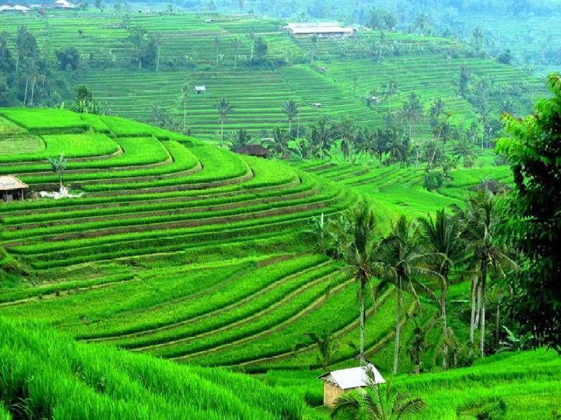 Туры из Житомира в феврале на Бали 888