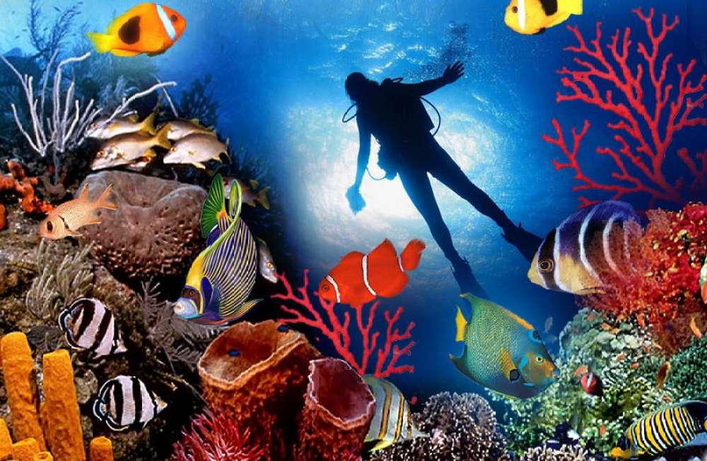 Туры из Житомира в феврале на Мальдивы 4