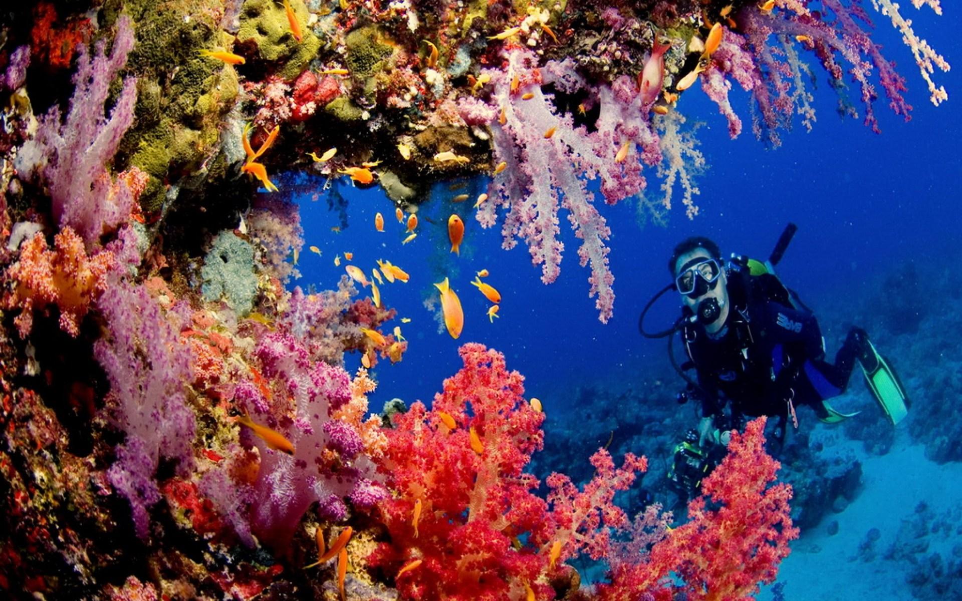 Coral reef scene Sanganeb Sudan