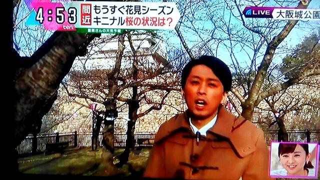 大阪城 桜 開花予想