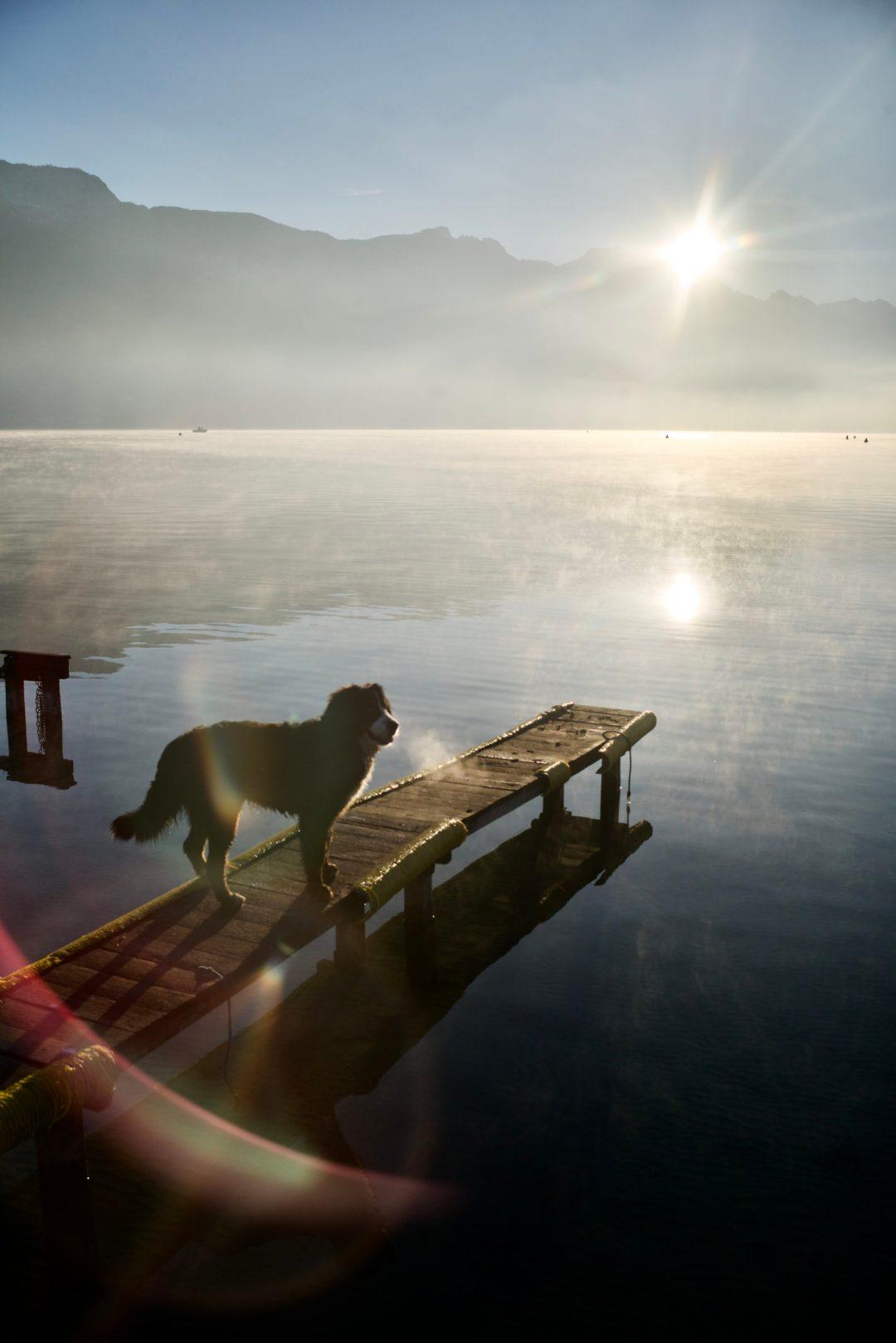 Rebelle sur un ponton au petit matin à Annecy devant le splectacle du levé de soleil