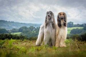 surrey dog photoshoot
