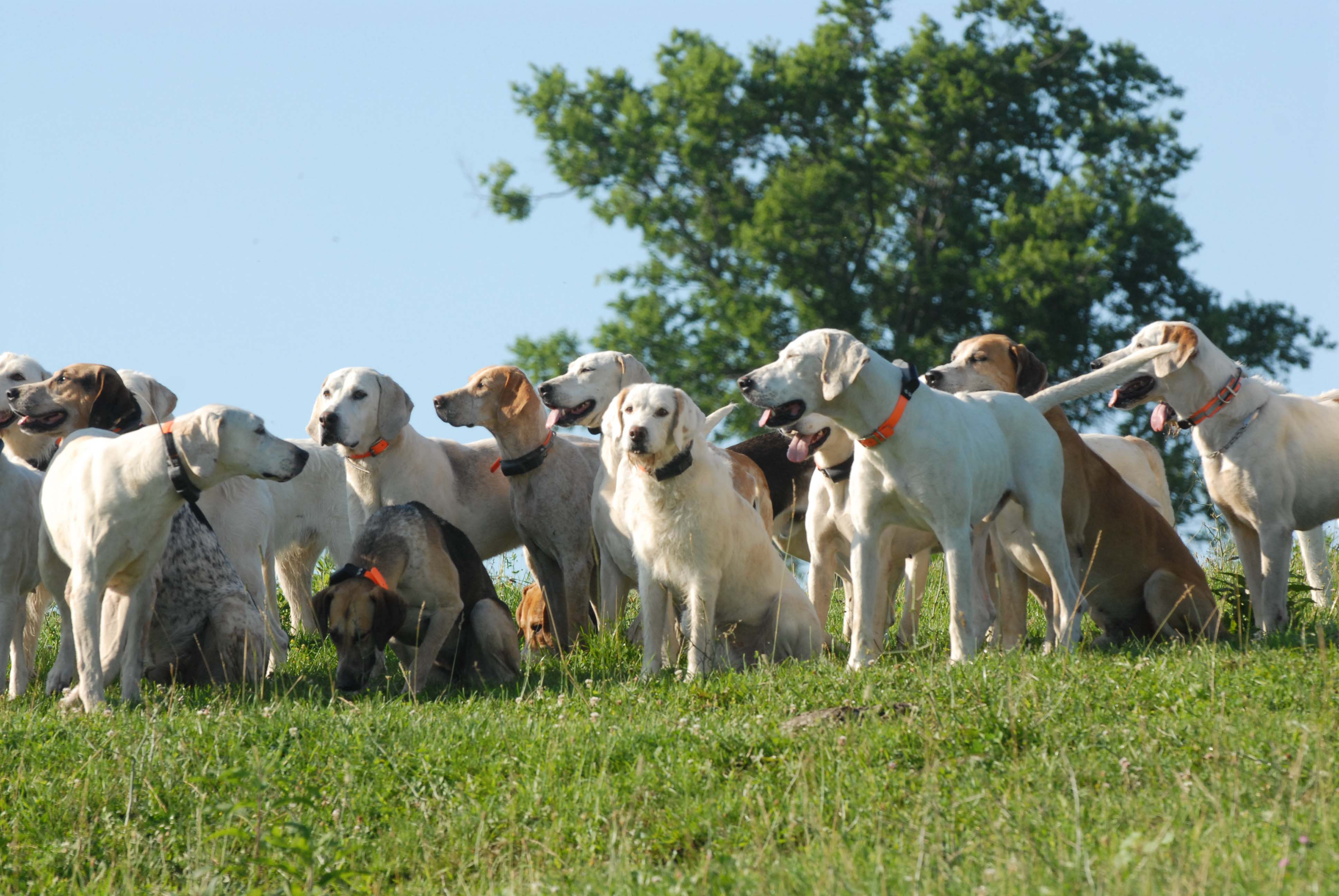 The hounds, as captured by photographer Peggy Maness