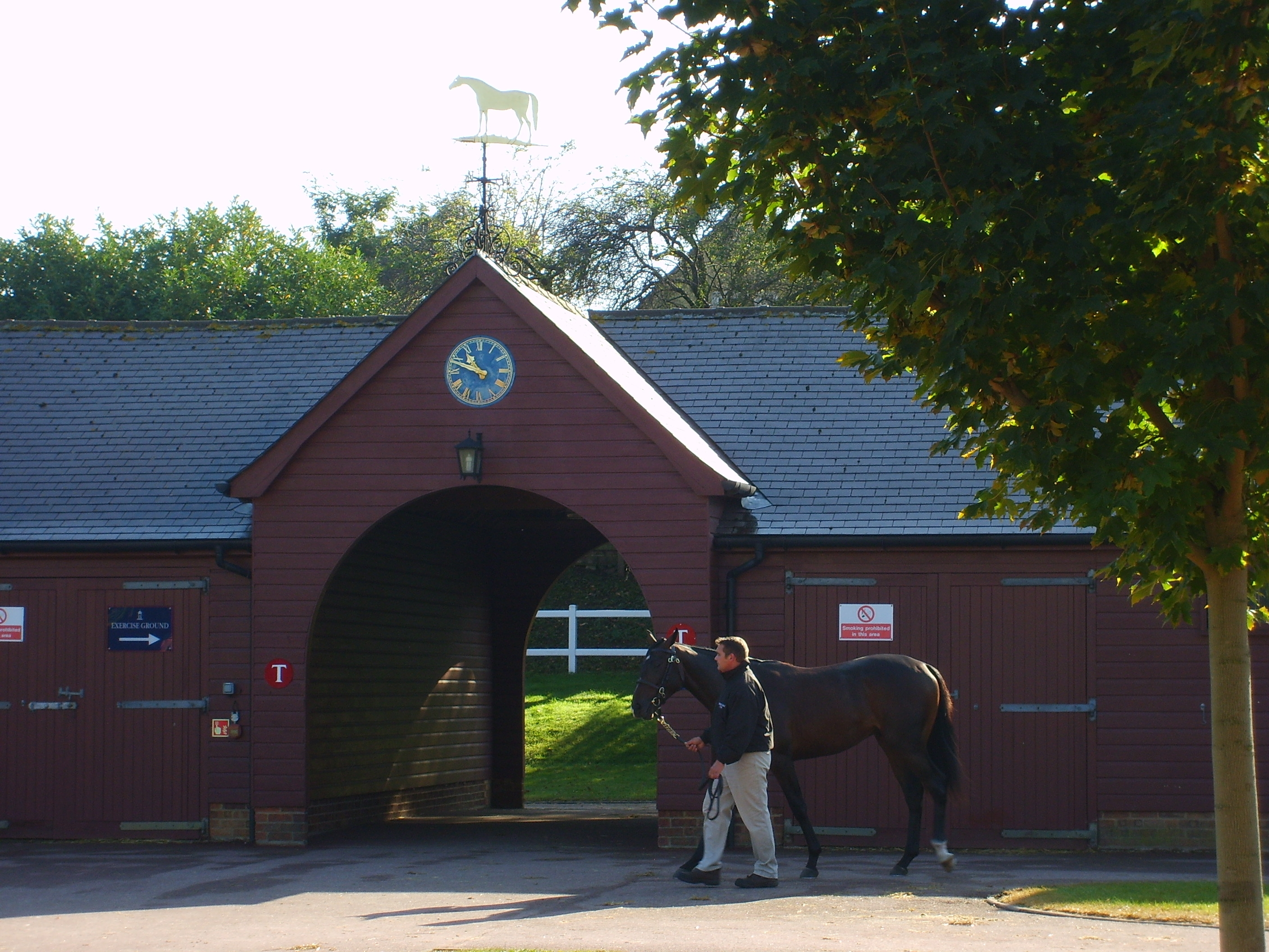 One of the Tattersalls sale barns, occupied by the Highclere agency's consignment.