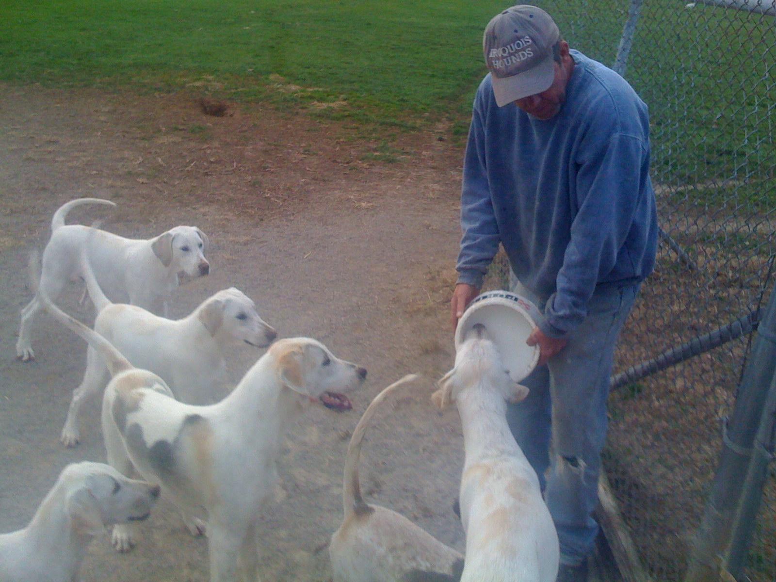 Baffle's pups Nov. 14, 2009