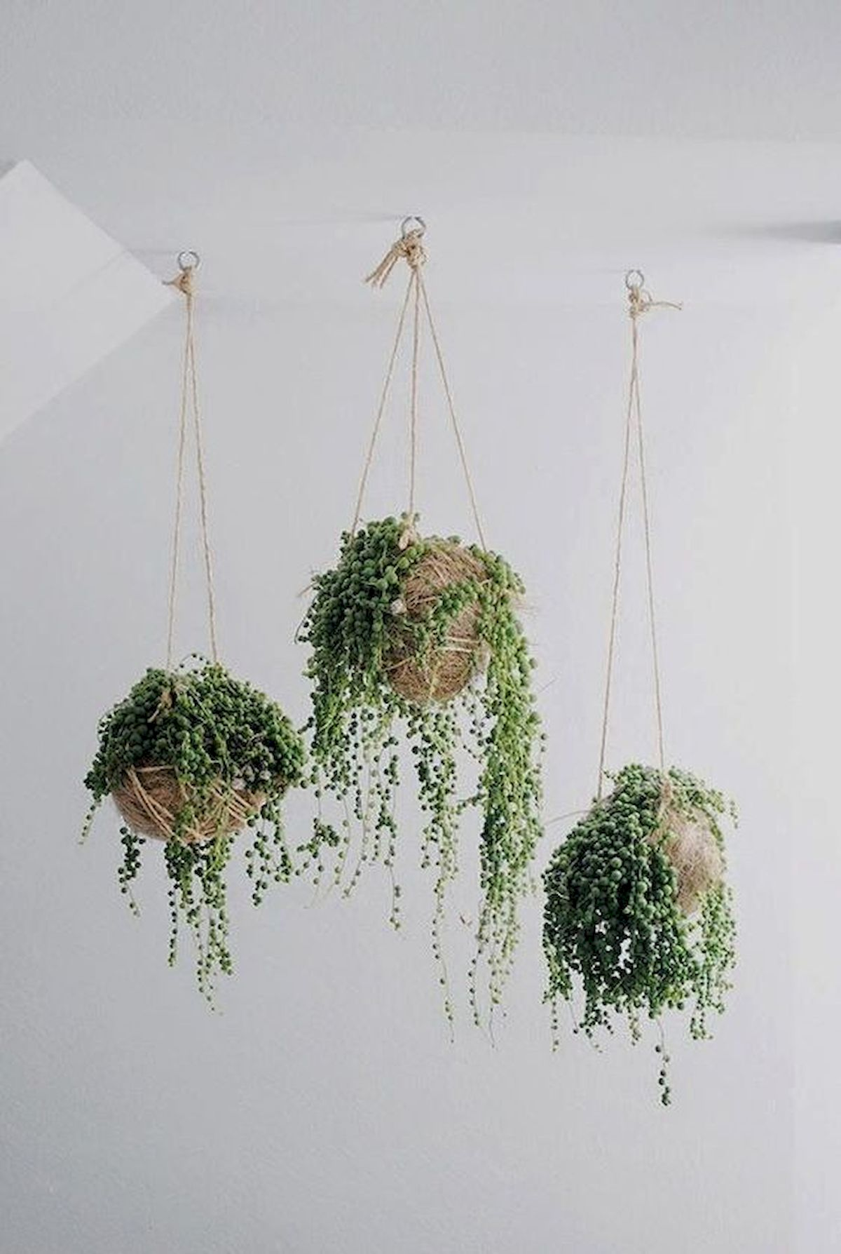 30 Cute Hanging Plants To Decorate Your Interior Home (4)