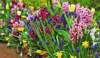 Схемы клумб из первоцветов: высадка цветов, оформление ...