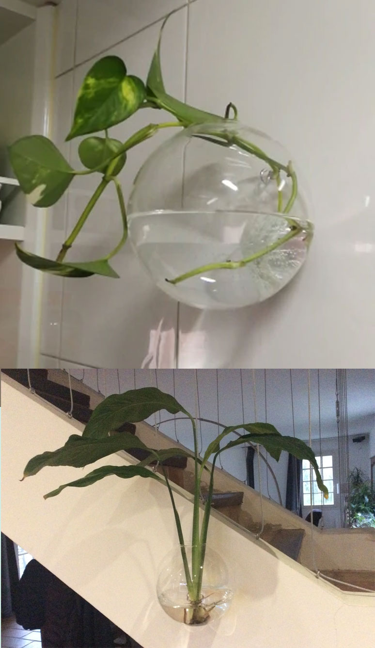 Hanging Glass Ball Vase Flower Planter