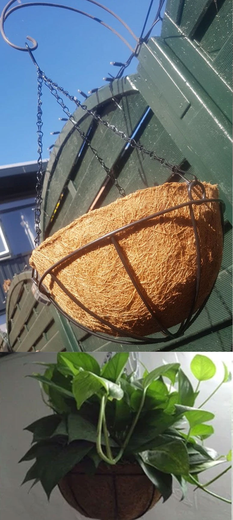 Hanging Coconut Vegetable Flower Pot