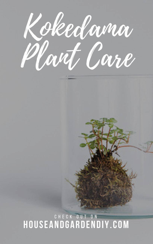 Kokedama Plant Care & Watering