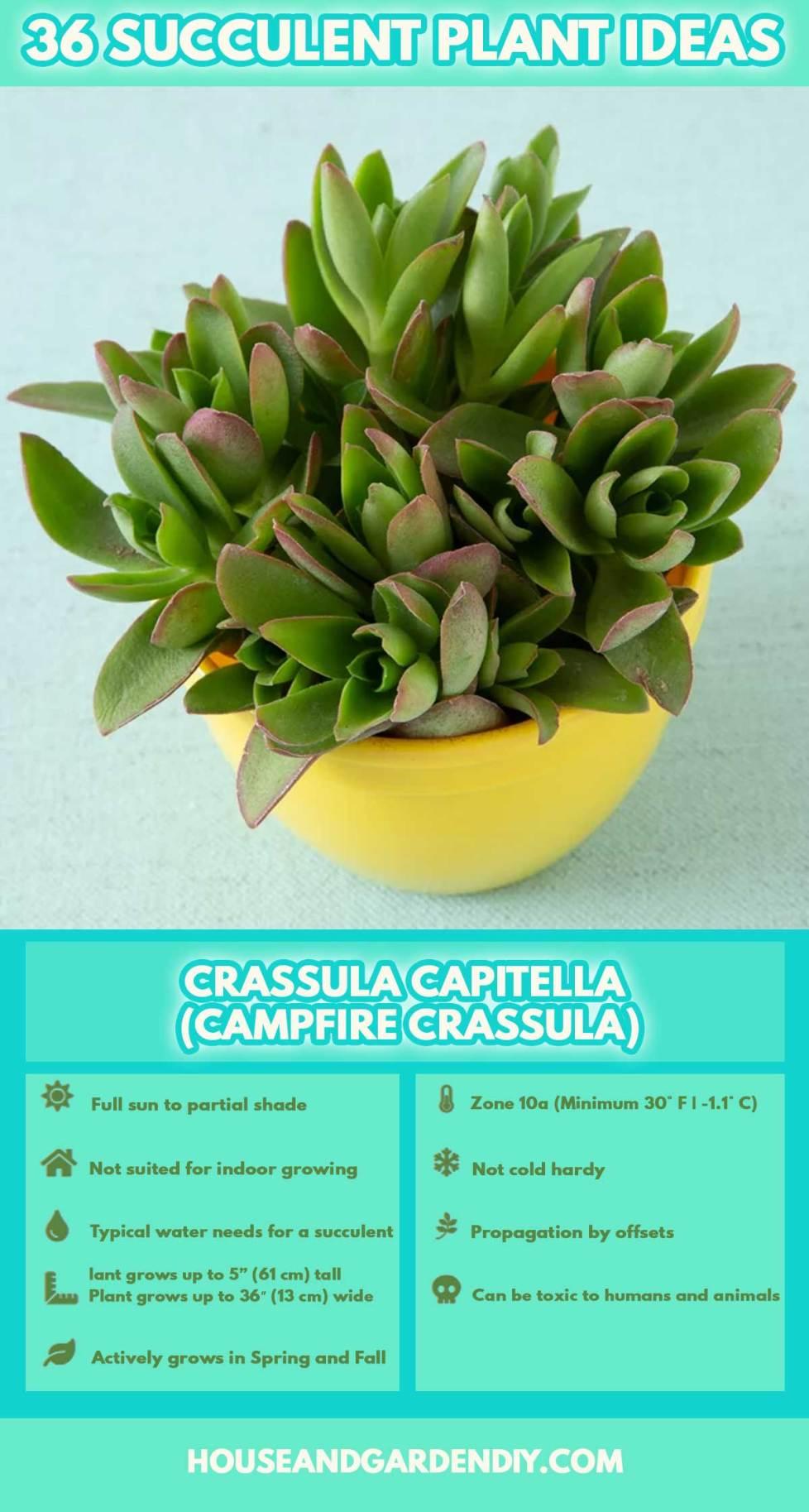 flowering succulent plant identification