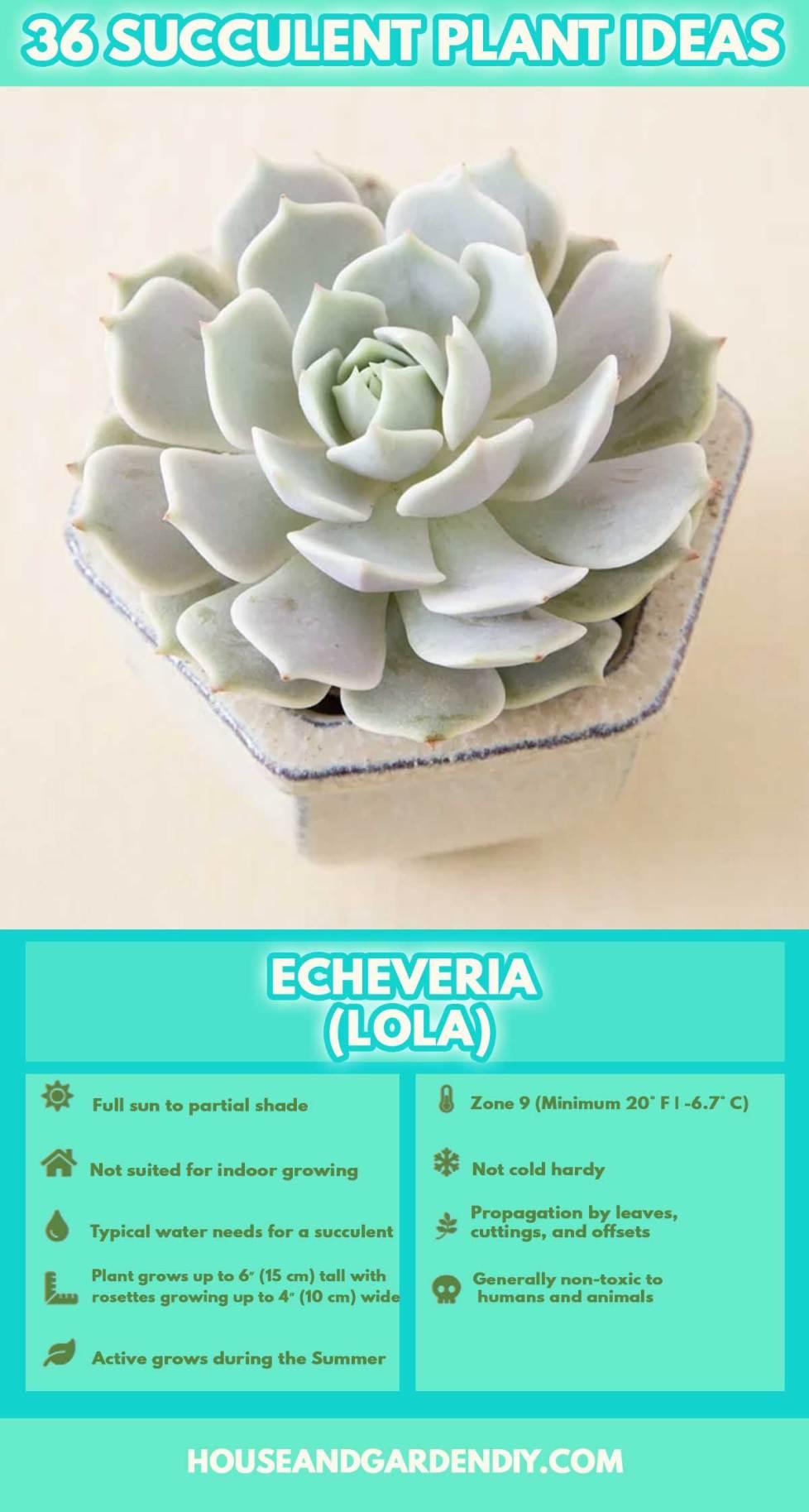 pictures of indoor cactus plants