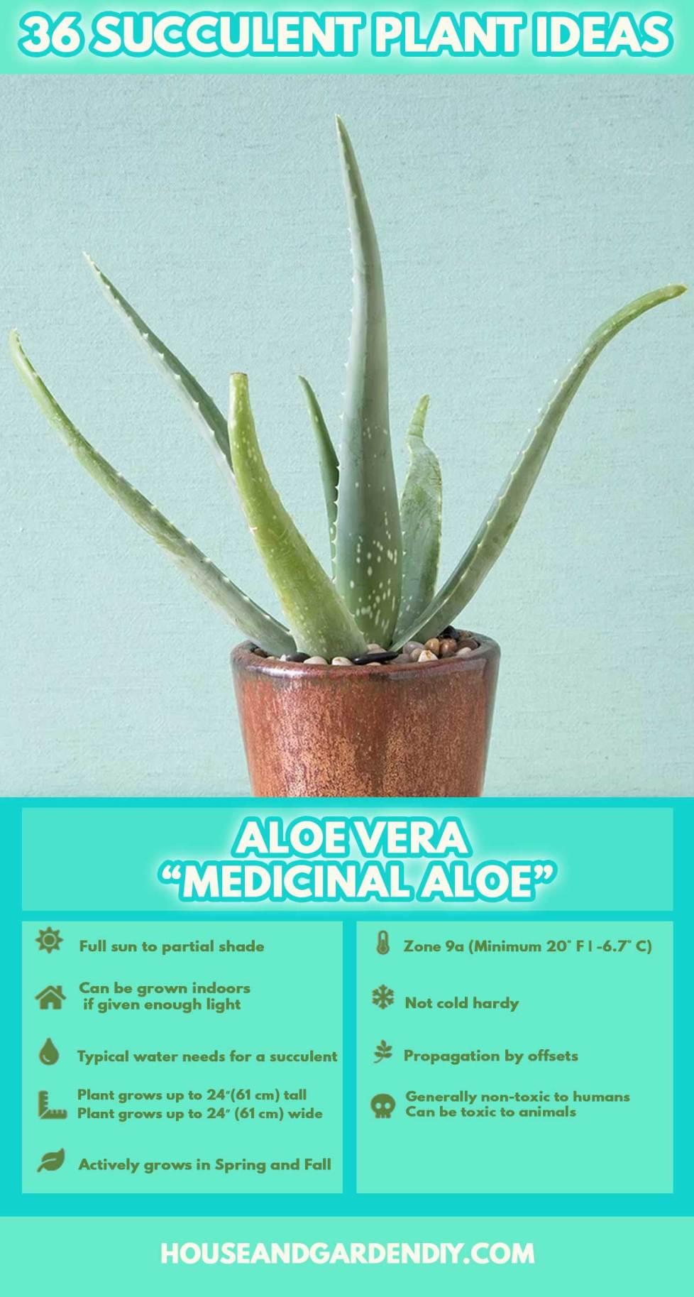 names of succulent plants
