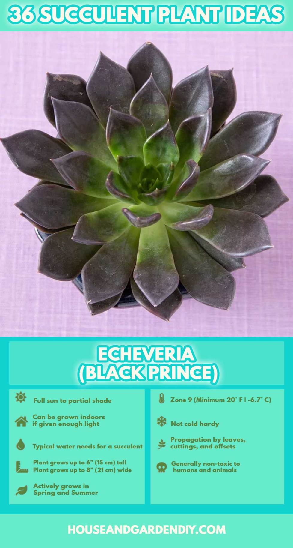 how to take care of succulents