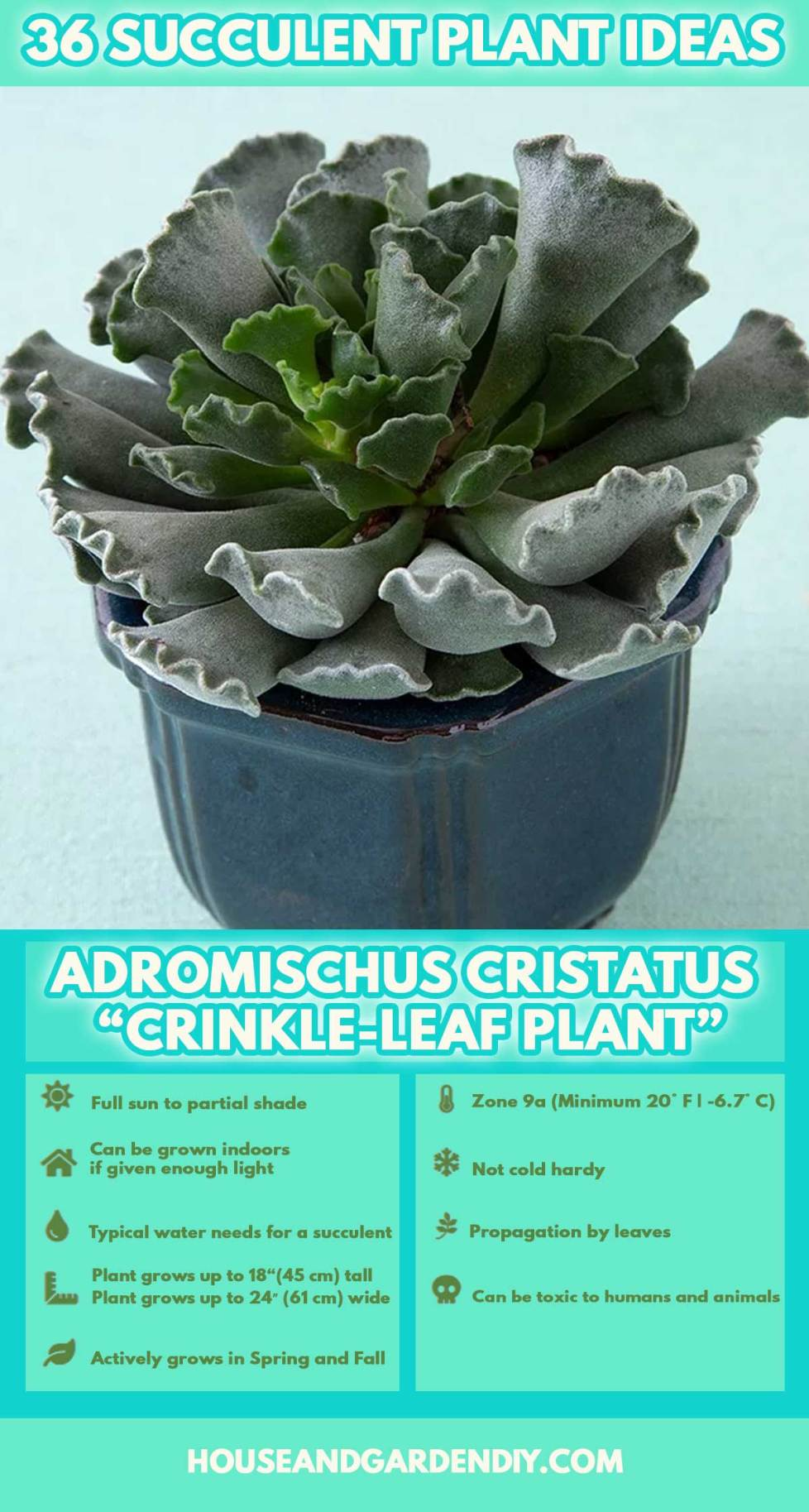 succulent varieties