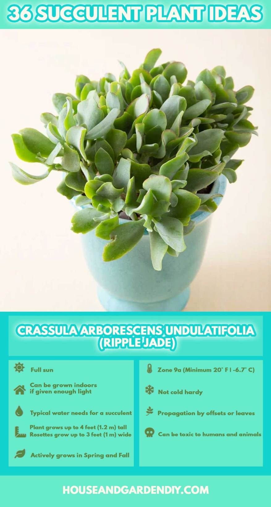 succulents identification and care pictures