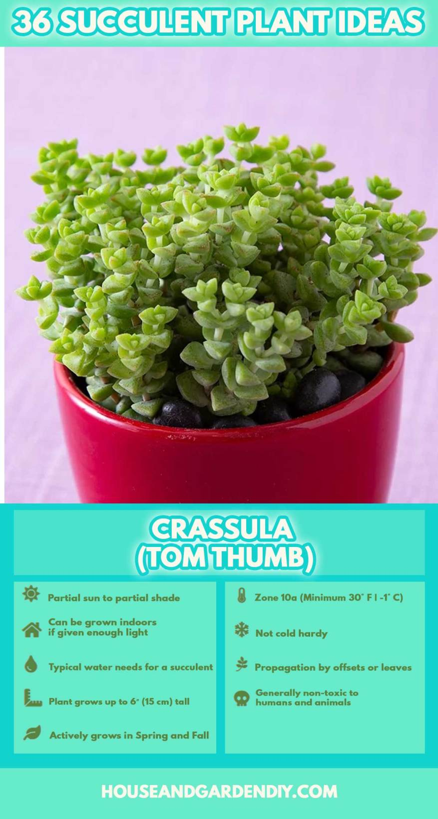 types of succulents with photos