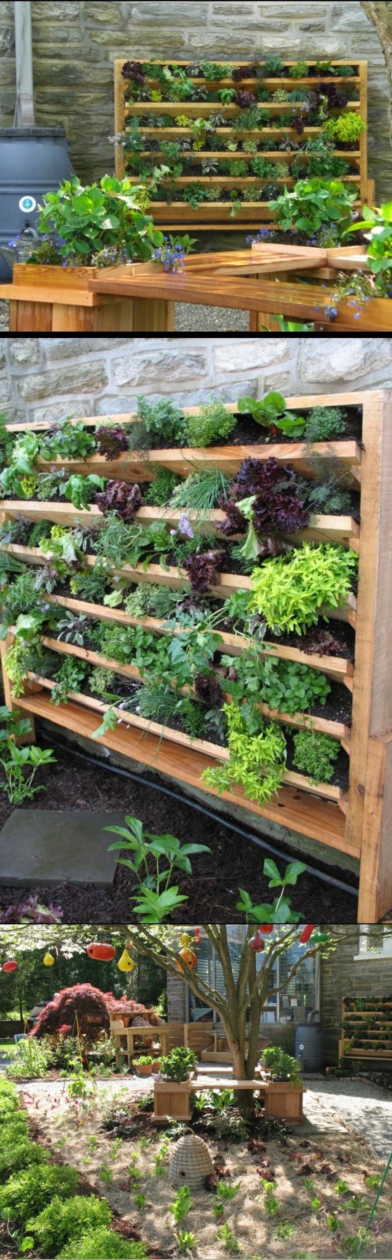 herb garden ideas for beginners