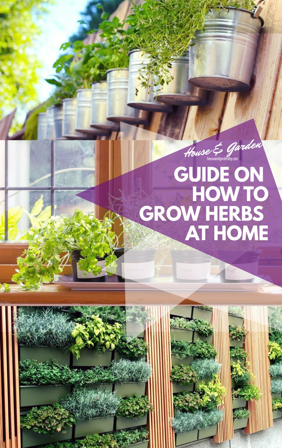 Guide on How to Grow Herbs at Home