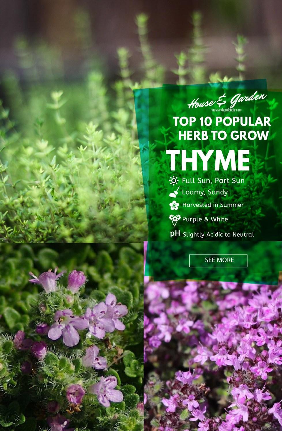 starting your herb gardens