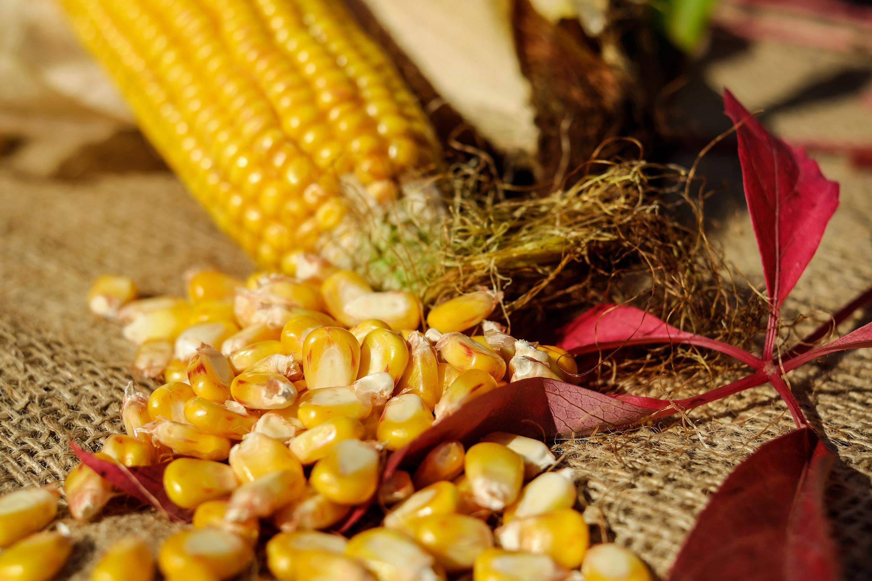 Gardening for Homesteaders: Going Beyond the Basics