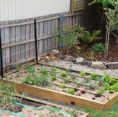 Steph's square foot garden beds