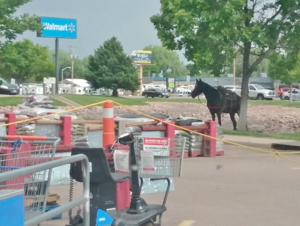 horse hitched at Walmart