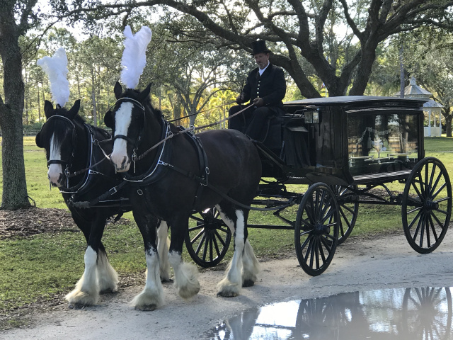 horse drawn hearse for hire