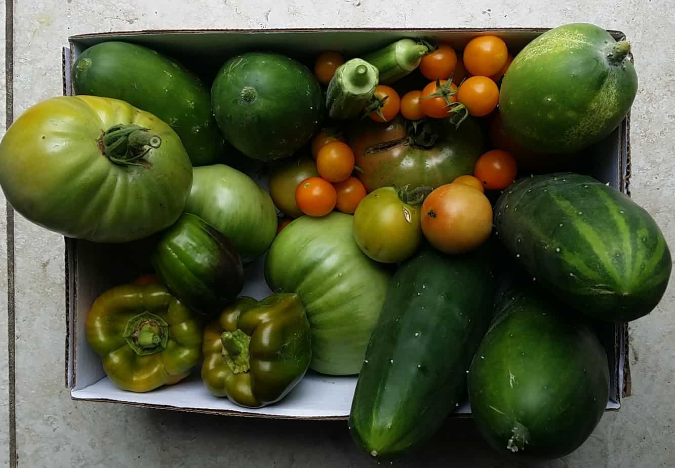 One days worth of harvest from the garden of Houseful Of Nicholes