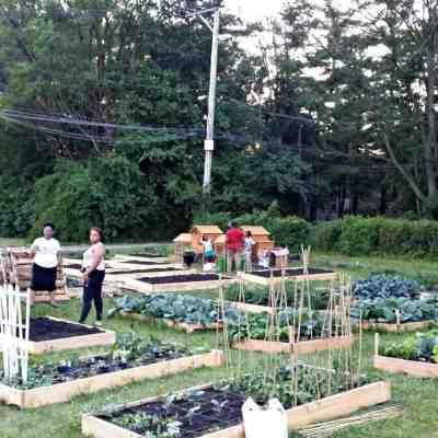 Community Garden Update