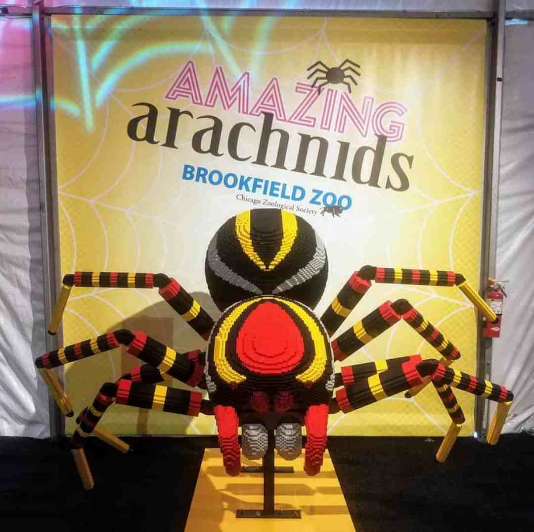 Amazing Arachnids at Brookfield Zoo