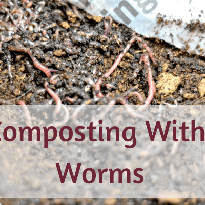 5 Worm Composting Tips