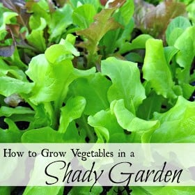 Homestead Blog Hop Feature - How to grow vegetable sin a shady garden