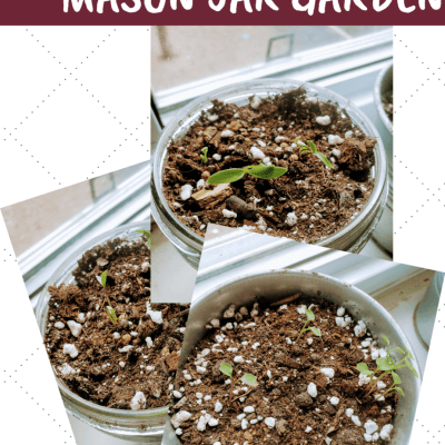 Starting a Mason Jar Garden in Your Windowsill