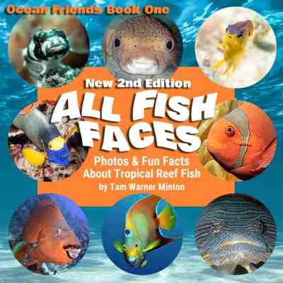 All Fish Faces – Picture Book Of Tropical Fish