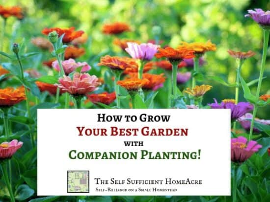 Homestead Blog Hop Feature - How-to-Grow-Your-Best-Garden-with-Companion-Planting