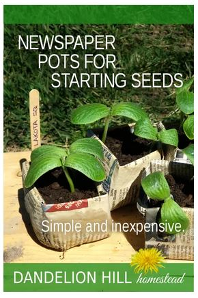 Homestead Blog Hop Feature - Newspaper pots and Starting Seeds 2