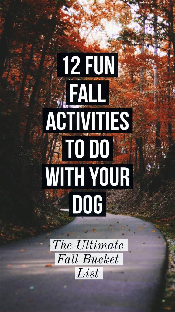 fall bucket list for you and your dog