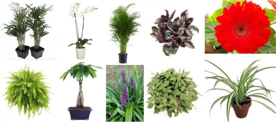 pet safe air purifying houseplants