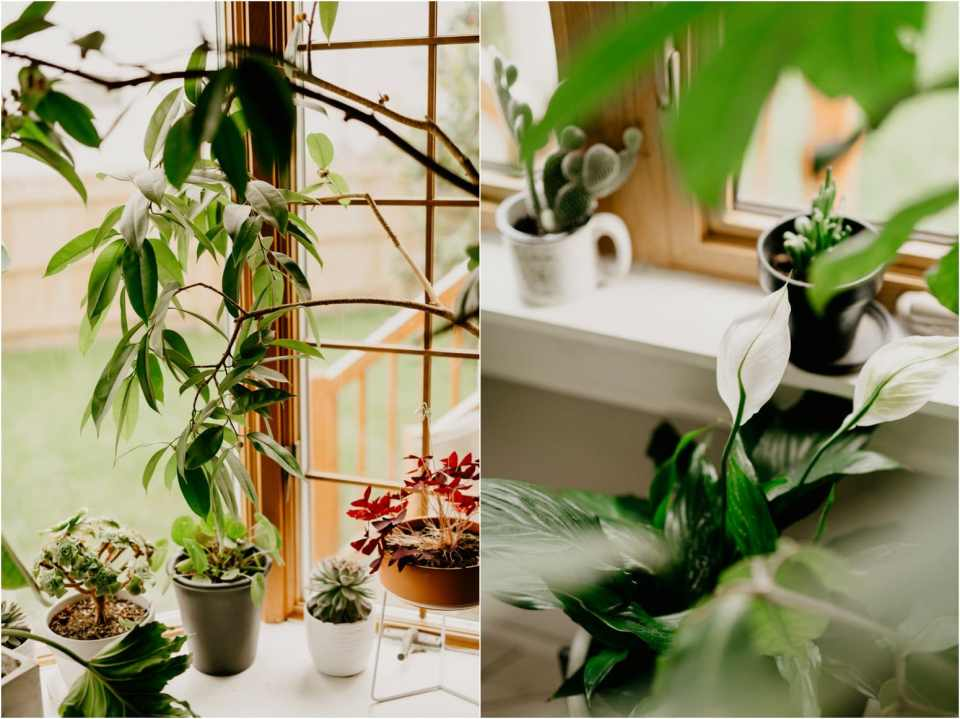 houseplants for clean air in your home
