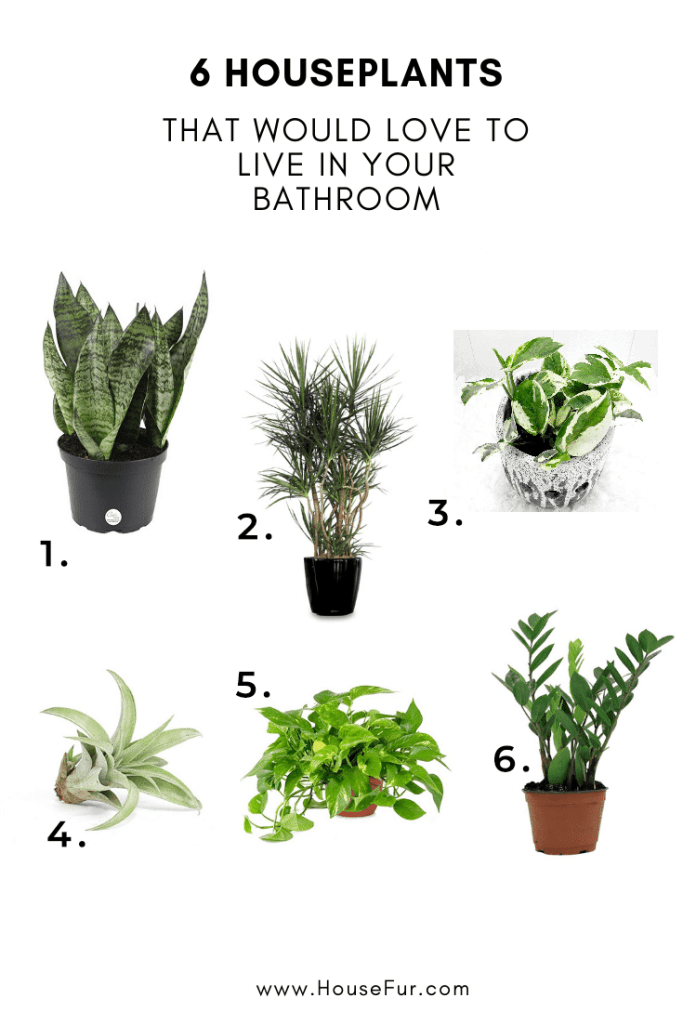 houseplants for your bathroom
