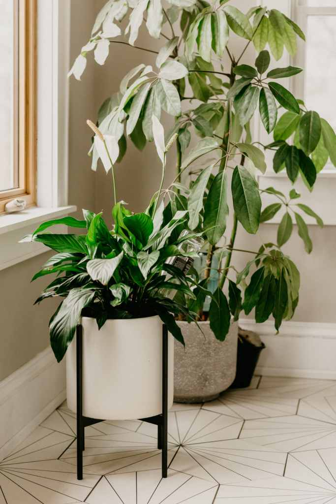 the easiest houseplant
