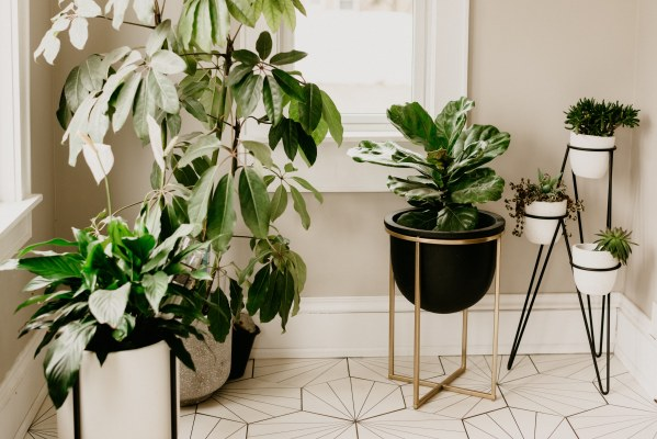 the best and easiest houseplant