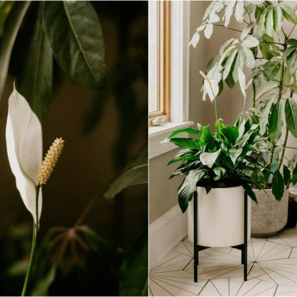 10 Houseplants That Need (Almost) Zero Sunlight