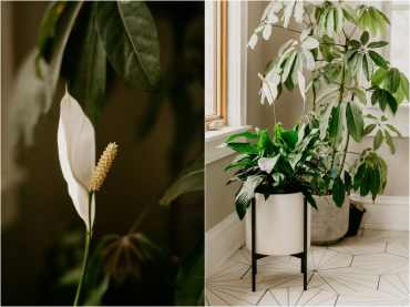 no light houseplants easy to care for