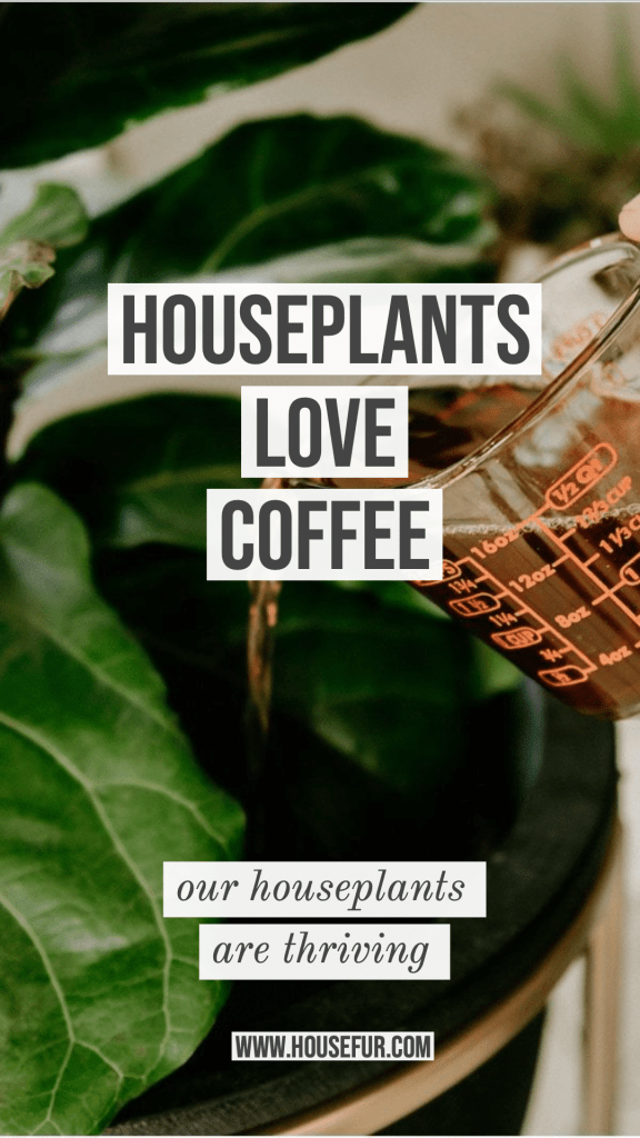 houseplants love coffee as a natural fertilizer