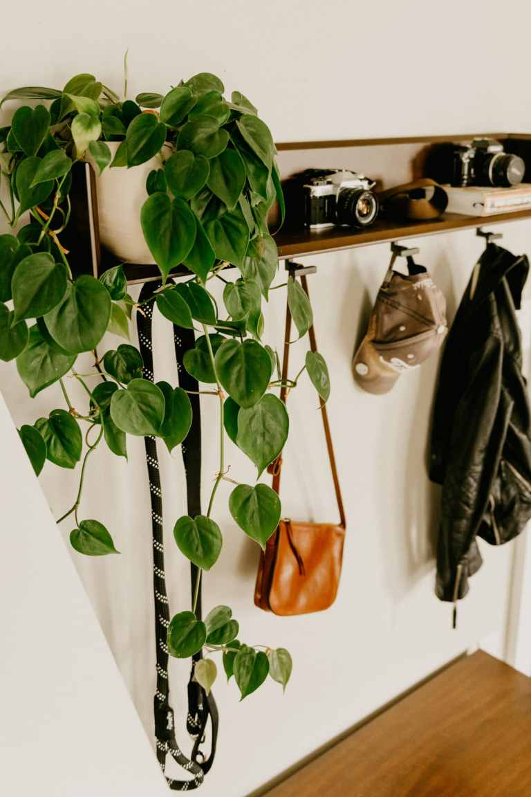 keep your houseplants alive