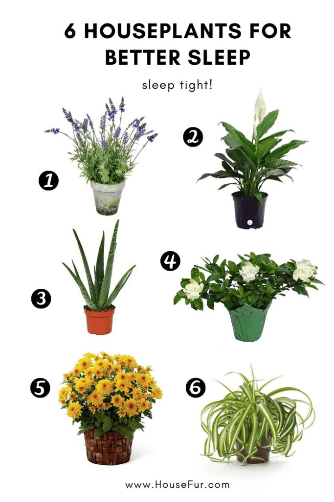 6 Houseplants for Better Sleep