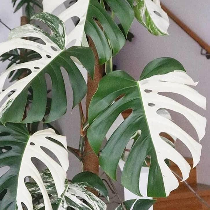 rare houseplants